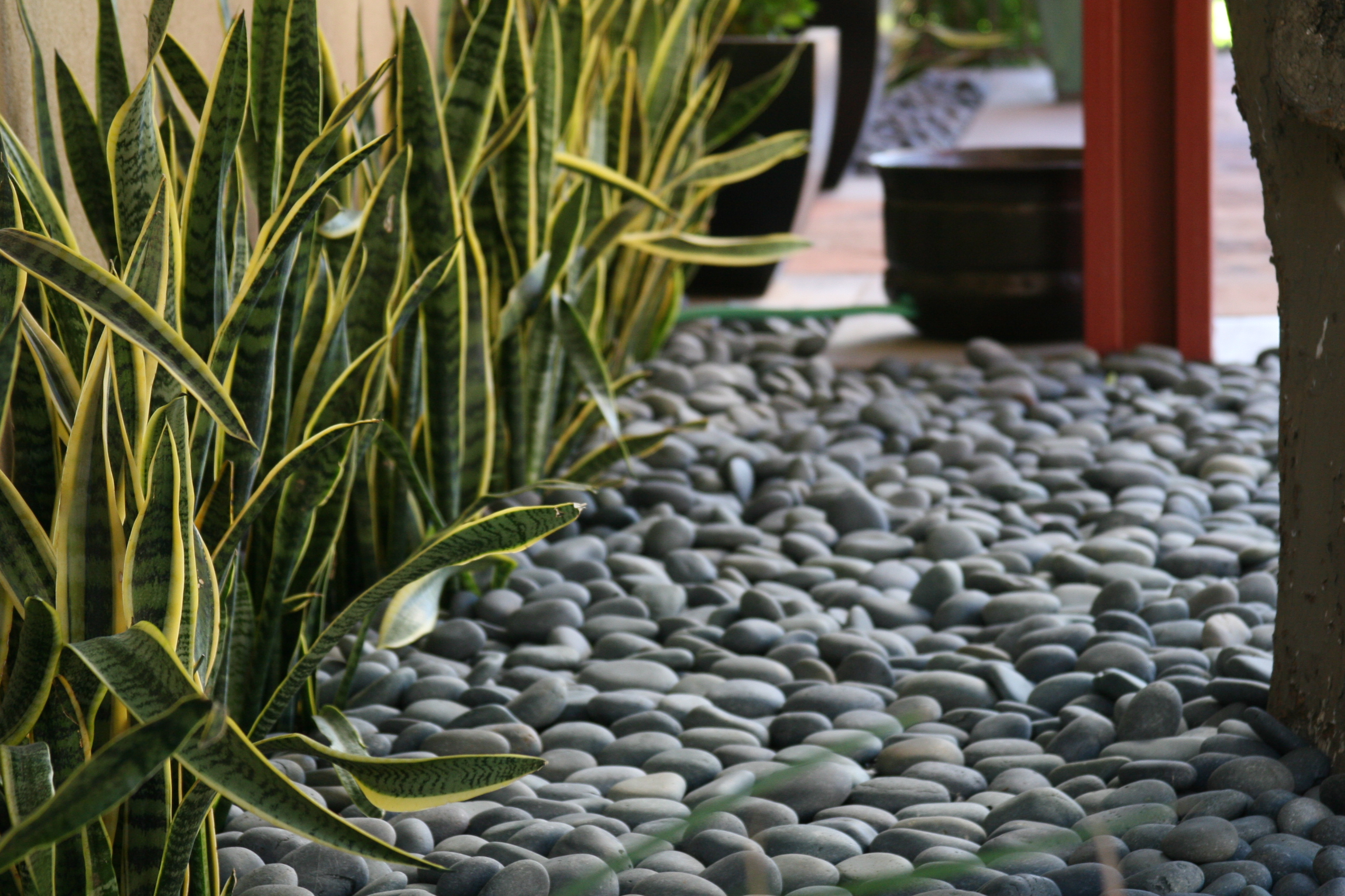 Turley international resources landscape beach pebble tir for Beach rocks for landscaping